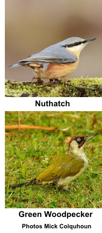 Nuthatch and Green Woodpecker