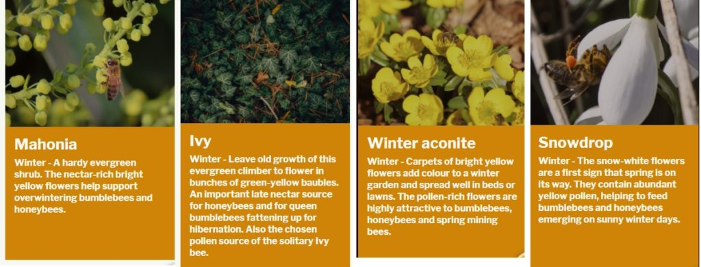 Winter flowering plants rich in nectar